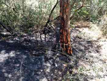 Principio d'incendio in Pineta: allarme |foto - Alghero News