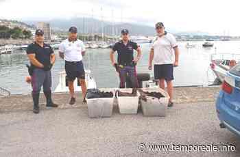 Formia / Guardia Costiera rigetta in mare 2500 ricci di mare vivi dopo un sequestro - Temporeale Quotidiano