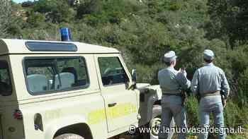Rogo di Ghilarza: individuato e denunciato il responsabile - La Nuova Sardegna