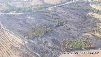 El incendio forestal de Belalcázar que ha quemado casi 20 hectáreas ya está controlado - Córdoba Buenas Noticias