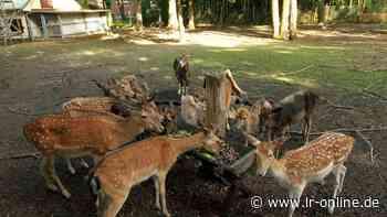 Körperliche Attacke: Tierbetreuer im Schlosspark Lauchhammer brutal angegriffen - Lausitzer Rundschau