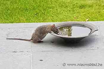 """""""Pak de rattenplaag nu aan, ik vang er elke week vier of vijf"""""""
