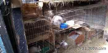 Polícia Ambiental resgata 85 animais em Leme e aplica multa de R$ 255 mil por maus-tratos - G1