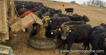 Silage beef webinar series begins July 7