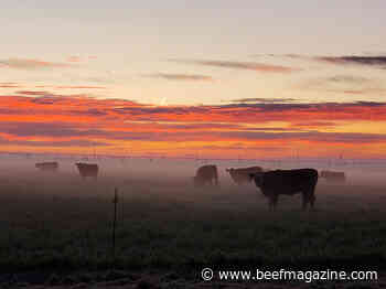 Beef Cattle Short Course to offer live demos
