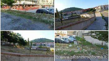 """Catanzaro, Rotundo: """"Degrado a via Fares. Possibile che siano stati sfalciati alberi piantati dal Comune?"""" - CatanzaroInforma"""