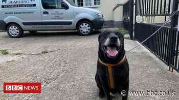 Kent: Elderly dog abandoned for 'not learning to be good'