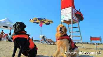 Tarquinia, bimbo rischia di affogare: salvato dai cani Sics - IlFaroOnline.it