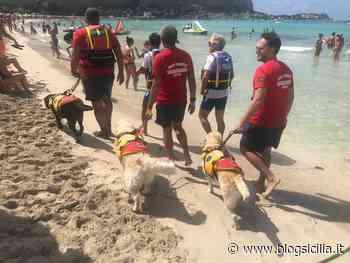 Tornano i 'cani bagnino' nel fine settimana nelle spiagge di Palermo - BlogSicilia.it