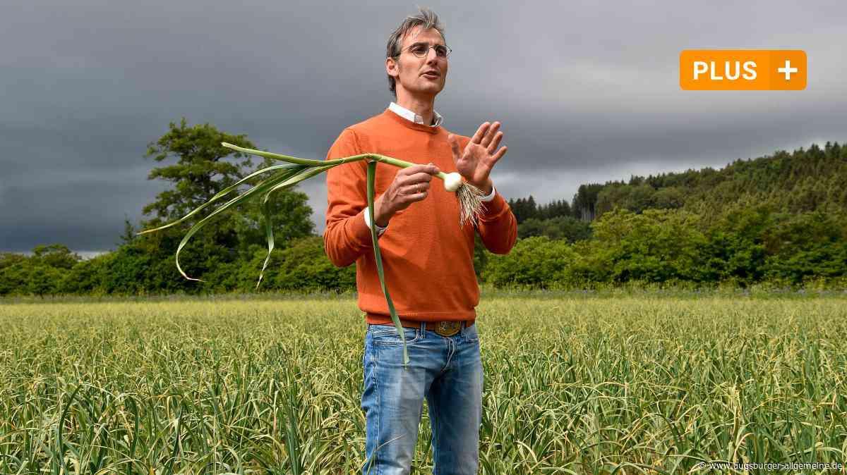 Gibt es dieses Jahr reiche Ernte im Landkreis Landsberg? - Augsburger Allgemeine