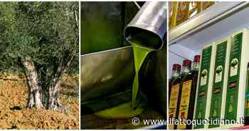 Olio d'oliva, ristoranti chiusi e esportazioni rallentate per il lockdown: crack da 2 miliardi… - Il Fatto Quotidiano