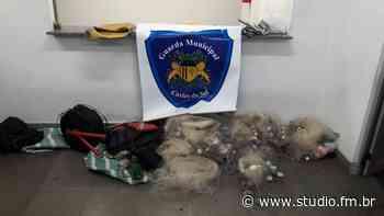 Guarda Municipal de Caxias do Sul prende dois homens em pesca predatória da represa do Faxinal | Rádio Studio 87.7 FM - Rádio Studio 87.7 FM