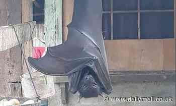 Photo of golden-crowned flying fox bat scares social media
