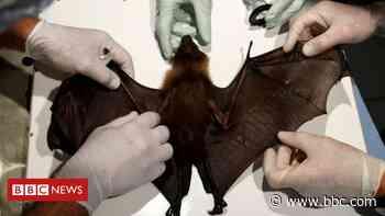 Coronavirus: Fear over rise in animal-to-human diseases - BBC News
