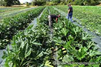 Agriculture - « Une formation en maraîchage 100% concrète à la rentrée » - Echo Républicain