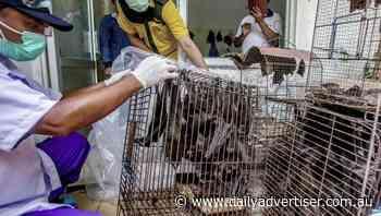 Animal-to-human viruses increasing: report - Daily Advertiser