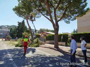 Andora, al via il taglio di alberi su tutto il territorio comunale - Bizjournal.it - Liguria
