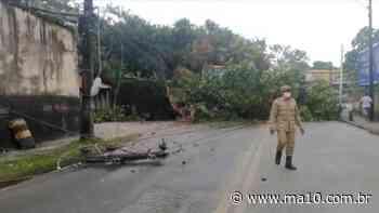 Chuva forte provoca queda de árvores no Anil e Itaqui-Bacanga - ma10.com.br