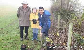 Green for go! Rishi Sunak's £3billion eco jobs boost with workers paid to plant trees
