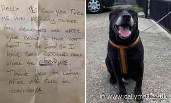 Abandoned black Labrador found tied to railings in Kent, with note asking kennels to take him