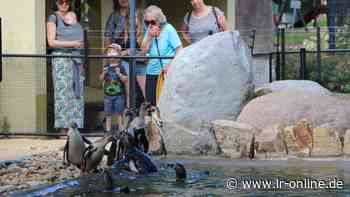 Nach Pilz-Drama 2018: Zoo Hoyerswerda eröffnet neue Pinguin-Anlage - Lausitzer Rundschau