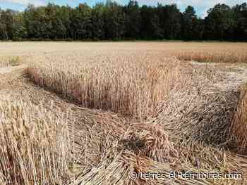 Un crop circle géant dans un champ de Vimy ! - Terres et Territoires