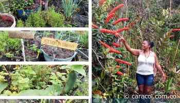 Mujeres de Nuquí toman la iniciativa de emprender sus propios productos - Caracol Radio
