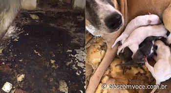 Cadela tenta salvar 7 filhotes queimados vivos – Portal Elos - Portal Elos