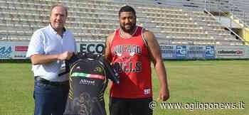 Rugby Viadana, il pilone destro: il tongano Halalilo nella prima linea giallonera - OglioPoNews