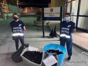 Ortona: la Guardia Costiera sequestra 2000 ricci di mare - Rete8