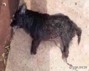 Cachorrinho é encontrado morto no Bairro Santa Cruz - CGN