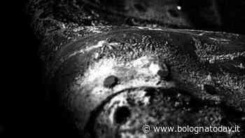 Le mostre di luglio da non perdere a Bologna - BolognaToday