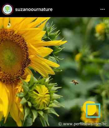 Suzano incentiva compartilhamento de fotos para estimular conexão entre pessoas e natureza em meio à pandemia - Perfil News
