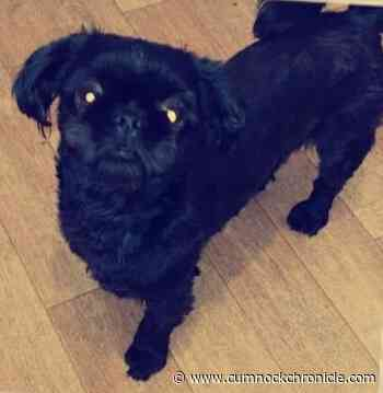 Can you help find Bella the dog missing in Cumnock? - Cumnock Chronicle