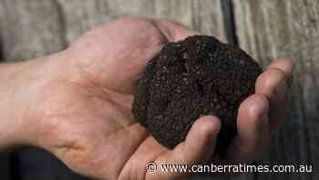 The Canberra Truffle Festival in the time of COVID-19 - The Canberra Times