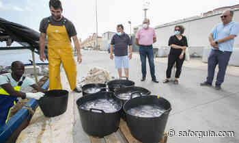 Gandia renueva el convenio con la Cofradía de Pescadores para que retiren bancos de medusas - Saforguia.com
