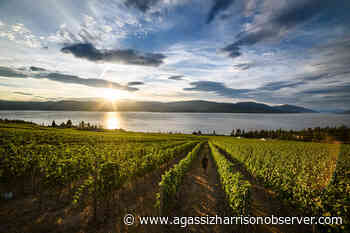 From Valleys to Vineyards: British Columbia's Bountiful Playground - Agassiz-Harrison Observer