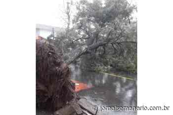 Ventos fortes derrubam árvores em Garibaldi – Jornal Semanário - jornalsemanario.com.br