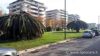 Predisposto un piano per la sistemazione del verde pubblico a Montesilvano - IlPescara