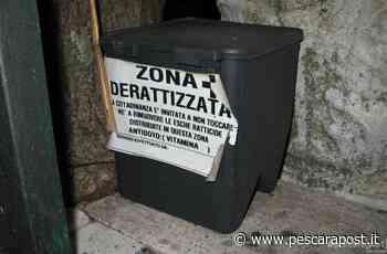 Derattizzazione Montesilvano inizio luglio 2020: dettagli e precauzioni per animali domestici - PescaraPost