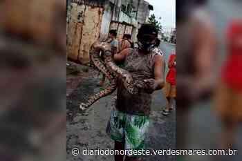 Morador resgata jiboia no bairro Parque Manibura, em Fortaleza - Diário do Nordeste