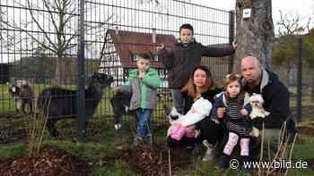 Familie wollte Kinder schützen: Amt fordert Zaun-Abriss in Sachsenheim - BILD