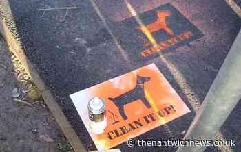 """Public consulted over Cheshire East """"special powers"""" on dog fouling - Nantwich News"""