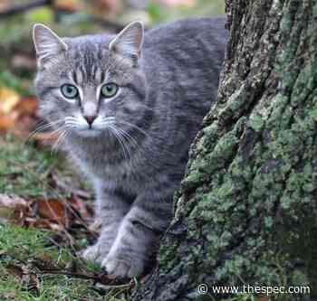 Cat killed in Mount Hope neighbour dispute - TheSpec.com