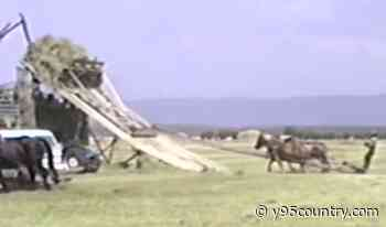 Watch This Retro Video From 1988 Of Horses Helping Ranchers Hay