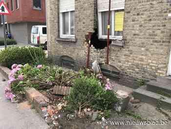 Bestuurder (80) van Mercedes rijdt bakfiets met jonge kinderen aan en knalt in gevel huis… dat klaar staat voor sloop