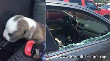 SOCIÉTÉ - Avons nous le droit de briser la vitre d'une voiture pour sauver un bébé ou un animal ? - Hérault-Tribune