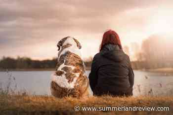 Morning Start: Dogs can smell cancer – Summerland Review - Summerland Review