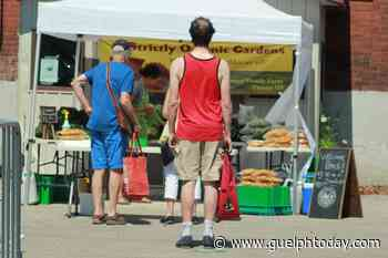 Fewer customers but high spirits at Guelph Farmers' Market first day back (10 photos) - GuelphToday