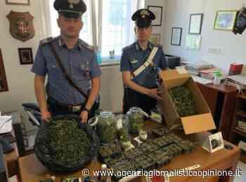 Carabinieri - bolzano * detenzione stupefacenti: « Arrestato un 39enne austriaco con un chilo e mezzo di droga - agenzia giornalistica opinione